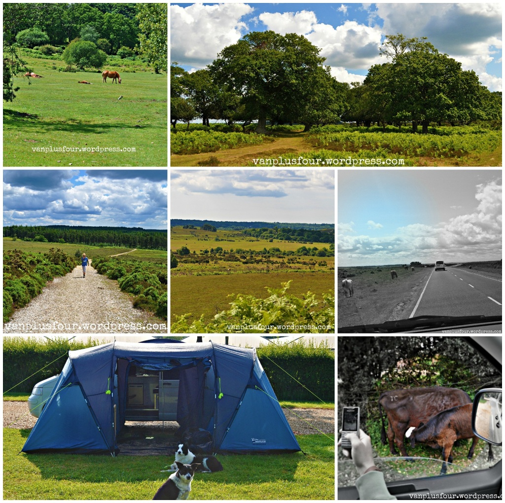 Wolvercroft Garden Centre & certificated camp site, New Forest