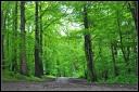 dog walk Delamere Forest Cheshire