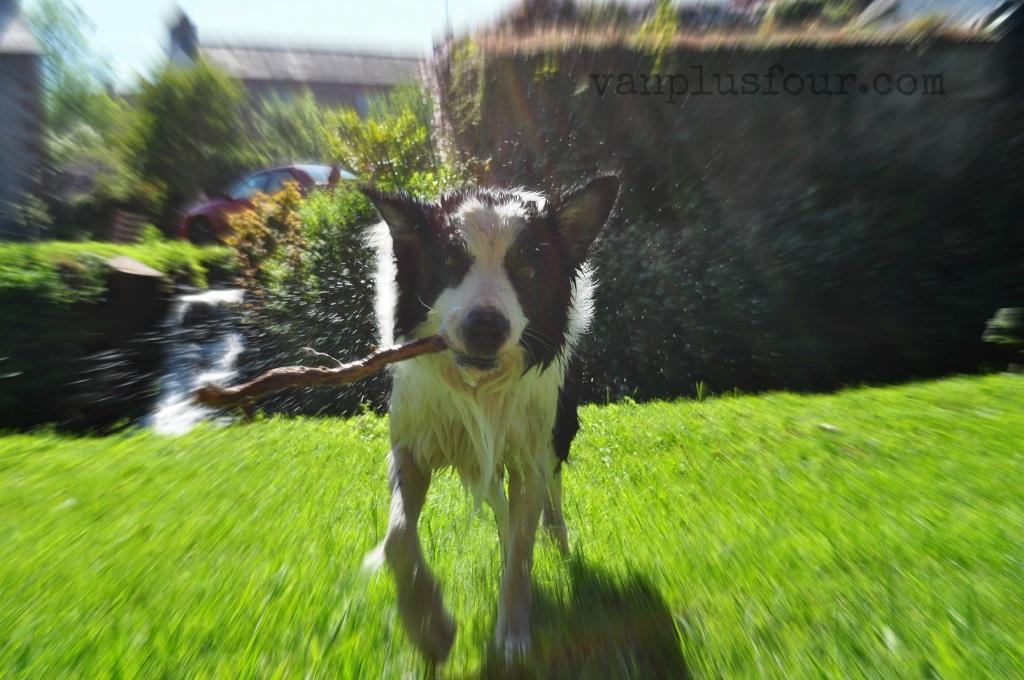 dogs at Morland Cumbria