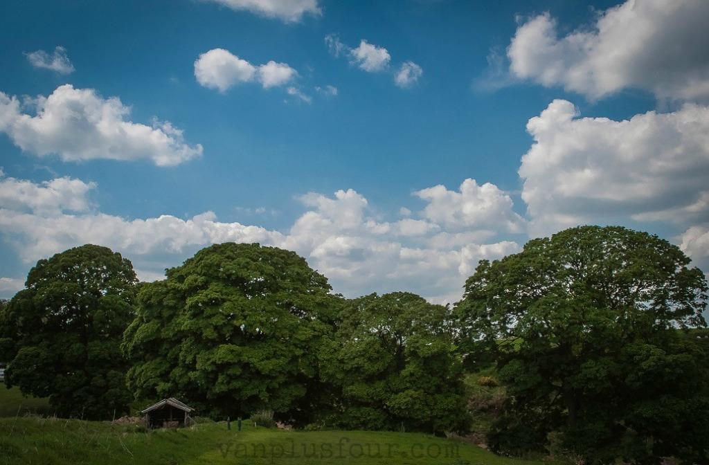 Hales Superbole Cheshire England
