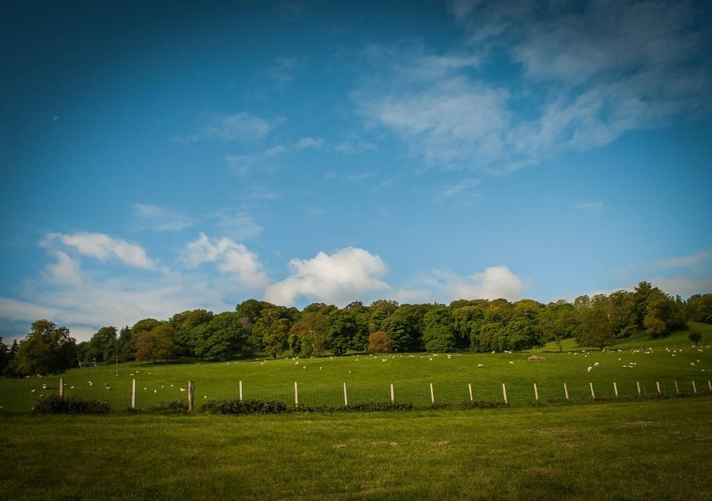 Woodfest, Kinmel Estate, Bodelwyddan, North Wales