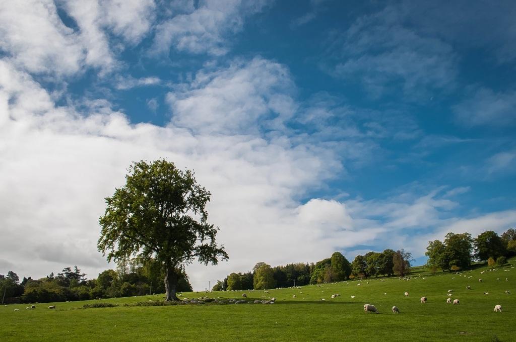 Woodfest, Kenmil Estate, Bodelwyddan, North Wales